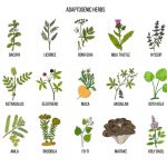 Adaptogenic Herbs: What You Should Know About Its Benefits