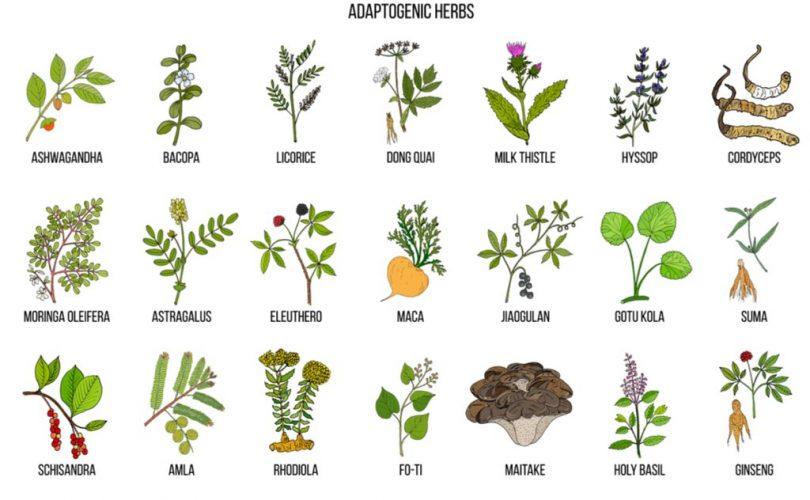 adaptogenic herbs